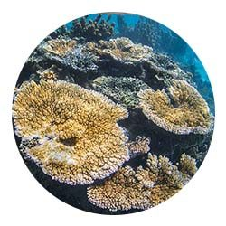 http://www.labex-corail.fr/wp-content/uploads/Coral-Circle2-250x250.jpg