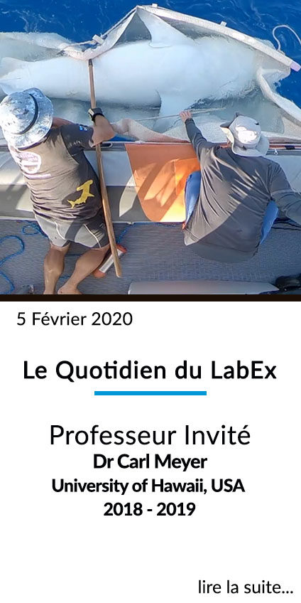 https://www.labex-corail.fr/wp-content/uploads/LABEX_FrontPage_Box_Fev2020Clua-424x848.jpg
